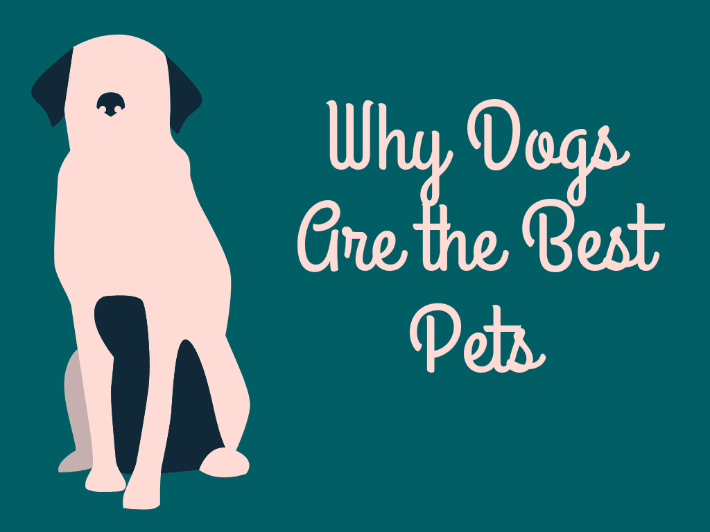 Why Dog is a Good Pet