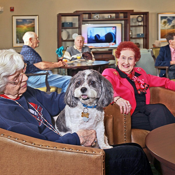What Are the Senior Care Options?